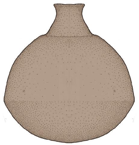 Etruria Preistorica Prima degli Etruschi Rinaldoniani Vaso a Fiasco