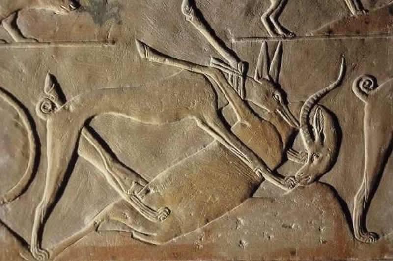 Scritto Nella Roccia - Shuwaymis - Petroglifo egiziano