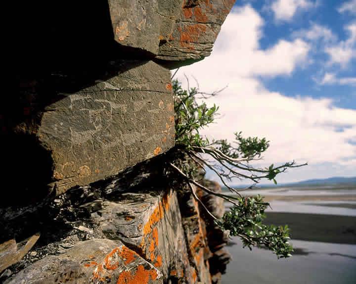 Scritto Nella Roccia - Siberia - Petroglifi Animali
